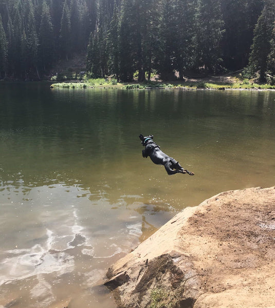rescue dogs swimming in a mountain lake hugo coffee roasters