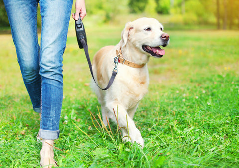 How to Create the Perfect Morning Dog Routine