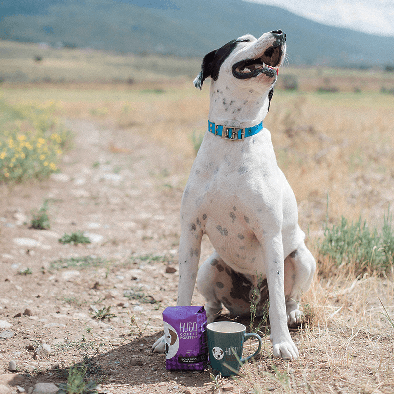 Rescue Dog Looking Up with Coffee and Mug