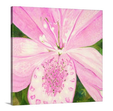 "Load image into Gallery viewer, Original Oil Painting - Light Pink Lily - 12""H x 12""W x 5/8""D"
