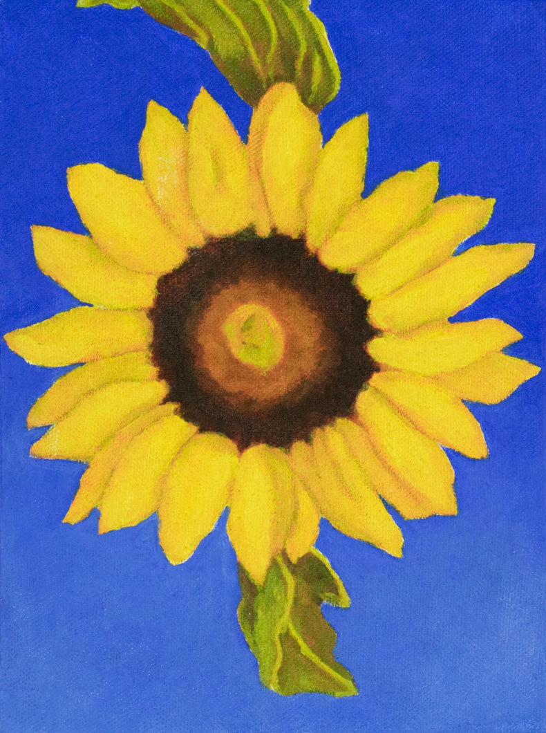 Original Oil painting  -  Single sunflower on an ultramarine blue background  -  6