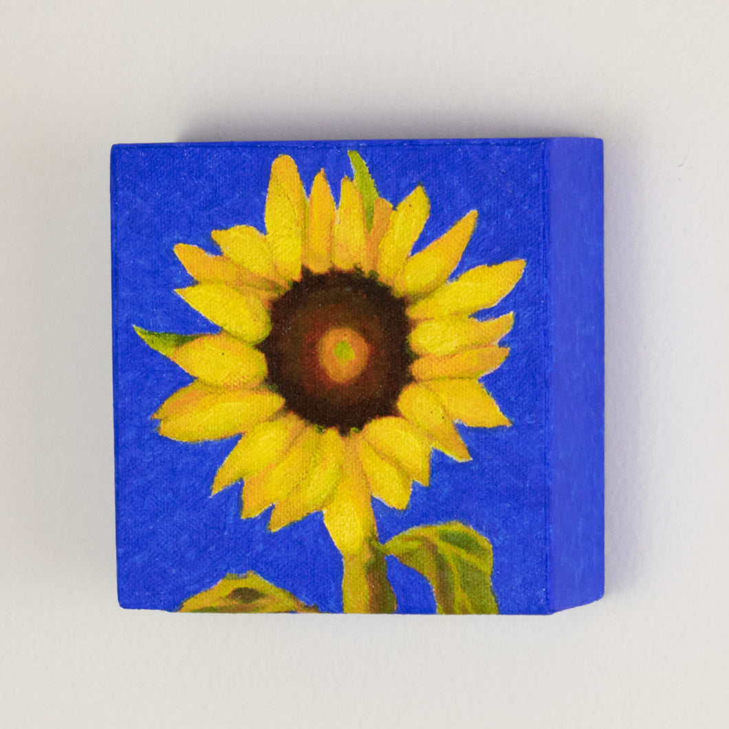 Original Oil painting  -  Single sunflower on an ultramarine blue background  -  4