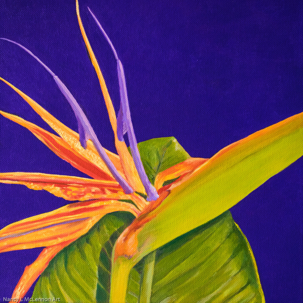 A painting, by fine artist Nancy McLennon, of a bright orange and purple 'Bird of paradise' bloom, surrounded by a deep, dark solid purple background