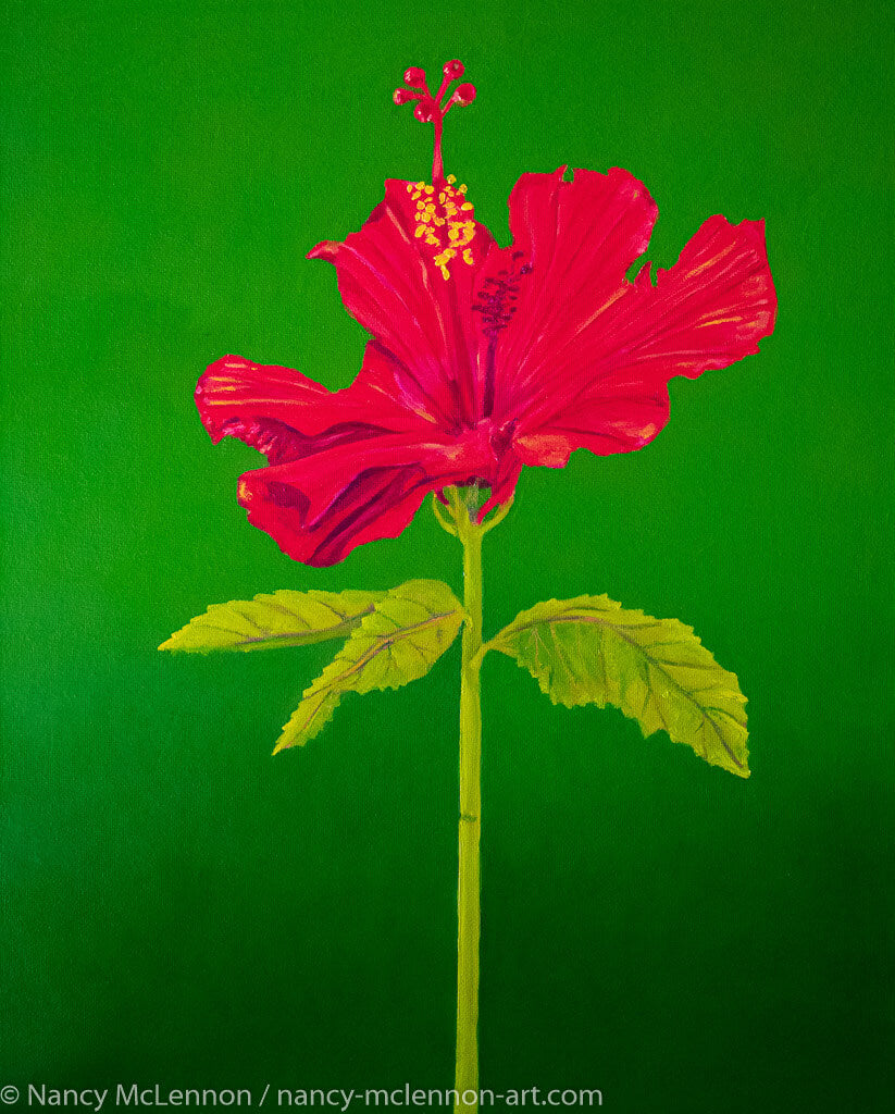 A painting, by fine artist Nancy McLennon, of a single Tall Hibiscus Rosa-Sinensis on green background