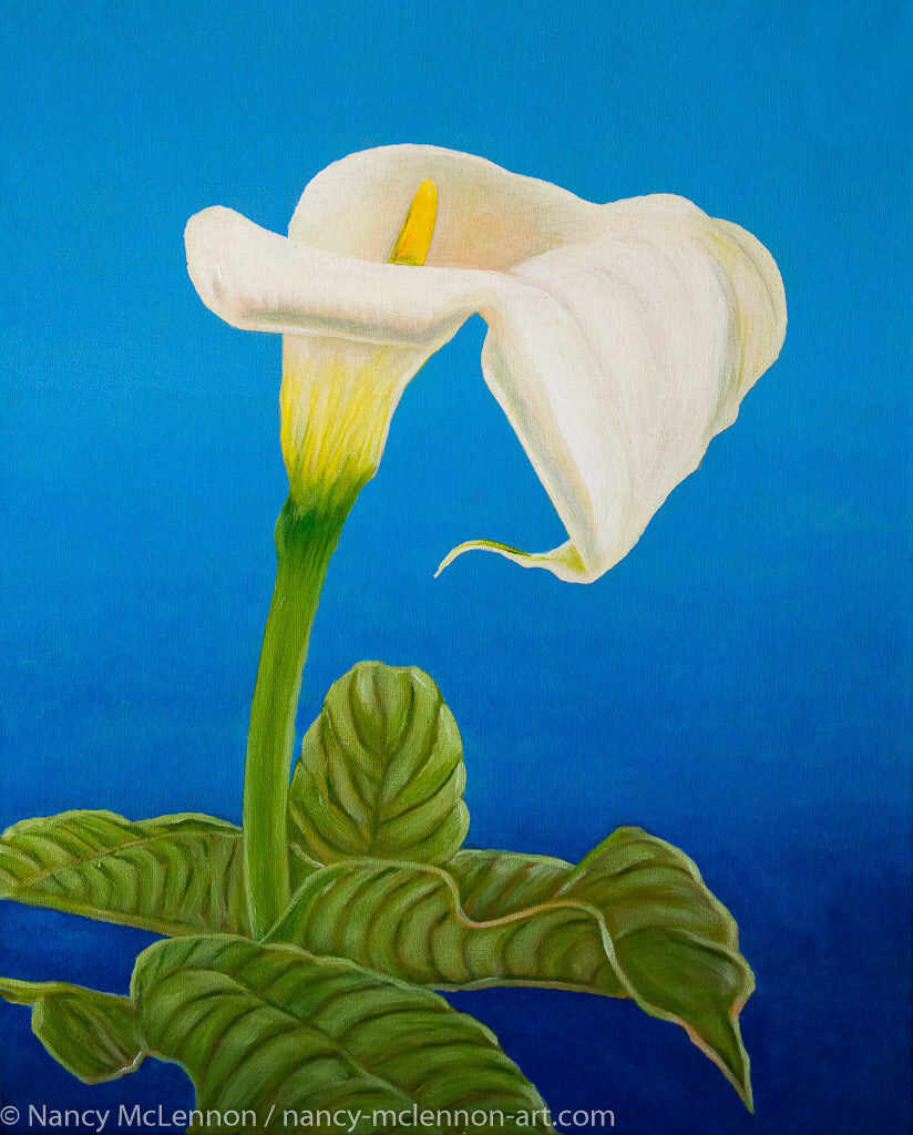 A painting, by fine artist Nancy McLennon, of a single White calla lily on blue background