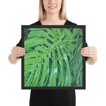 Load image into Gallery viewer, Framed Print - Monstera Leaf in vivid green - FREE SHIPPING