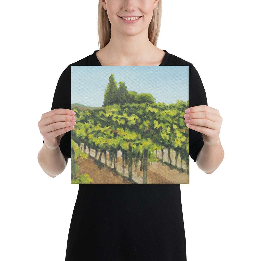 Canvas Print - Napa Valley vineyard before harvest 1 - FREE SHIPPING