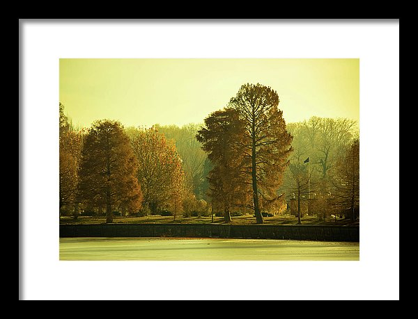 Nature Impressions - Framed Print