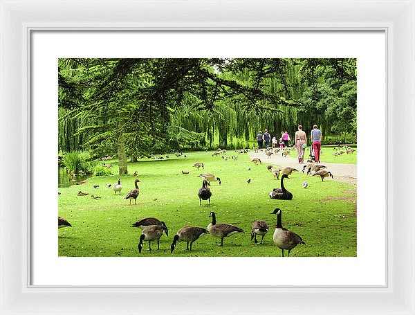 A Leap From Urban To Serene - Framed Print