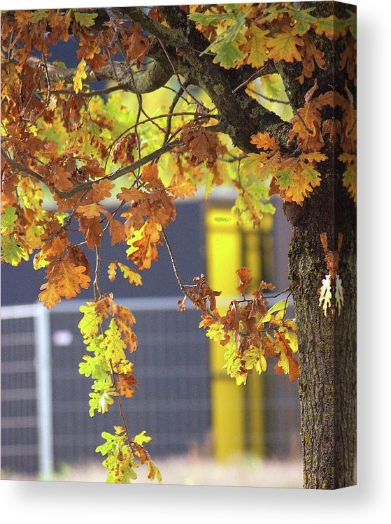 Autumn Leaves - Canvas Print