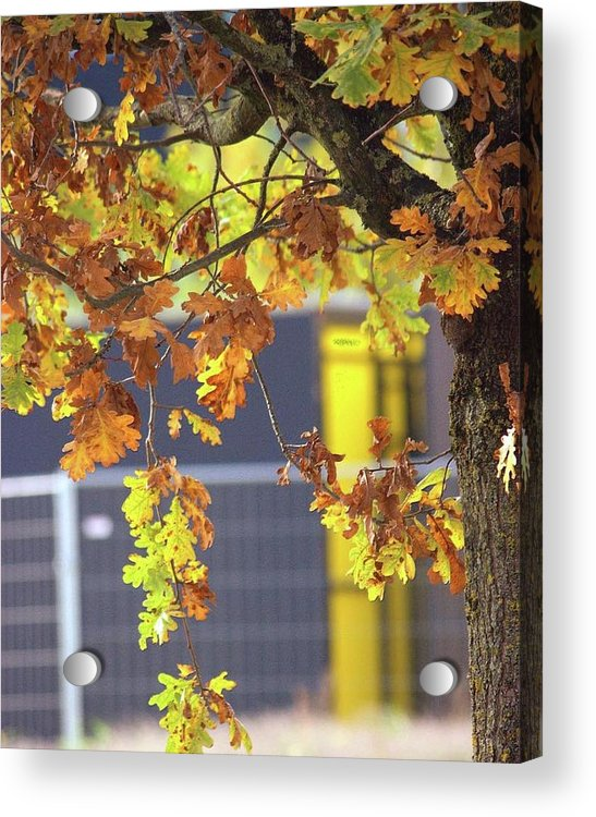 Autumn Leaves - Acrylic Print
