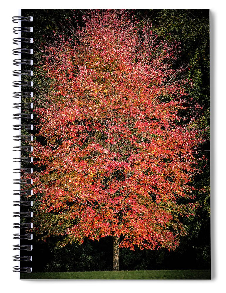 Autumn Touch  - Spiral Notebook