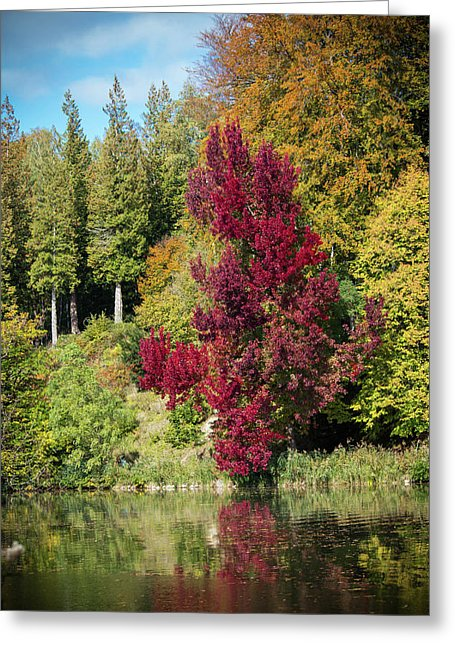 Autumnal View In Belgium - Greeting Card