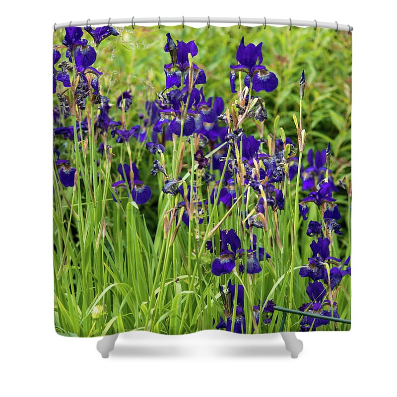 Blue Irises - Shower Curtain
