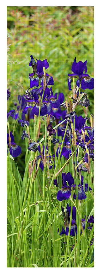 Blue Irises - Yoga Mat