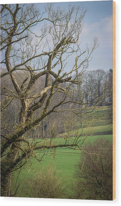 Countryside In Belgium - Wood Print