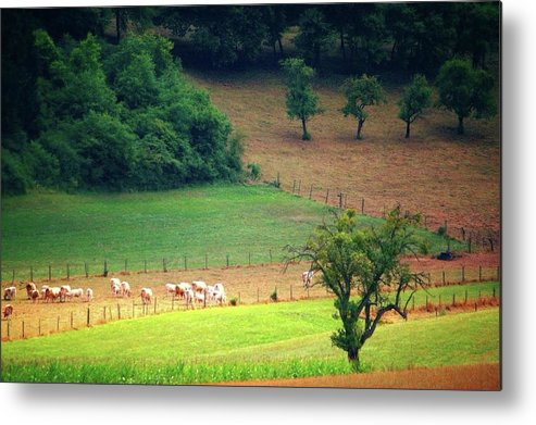 Countryside Landscape - Metal Print