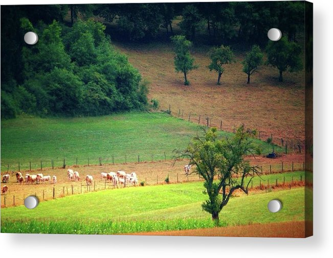 Countryside Landscape - Acrylic Print