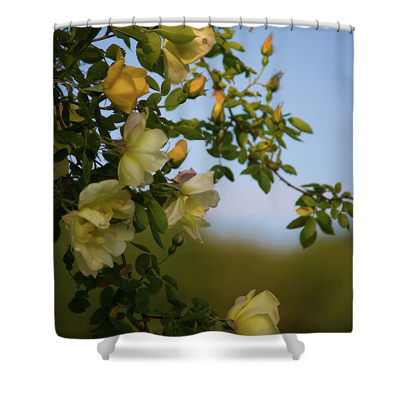 Delicate Roses - Shower Curtain