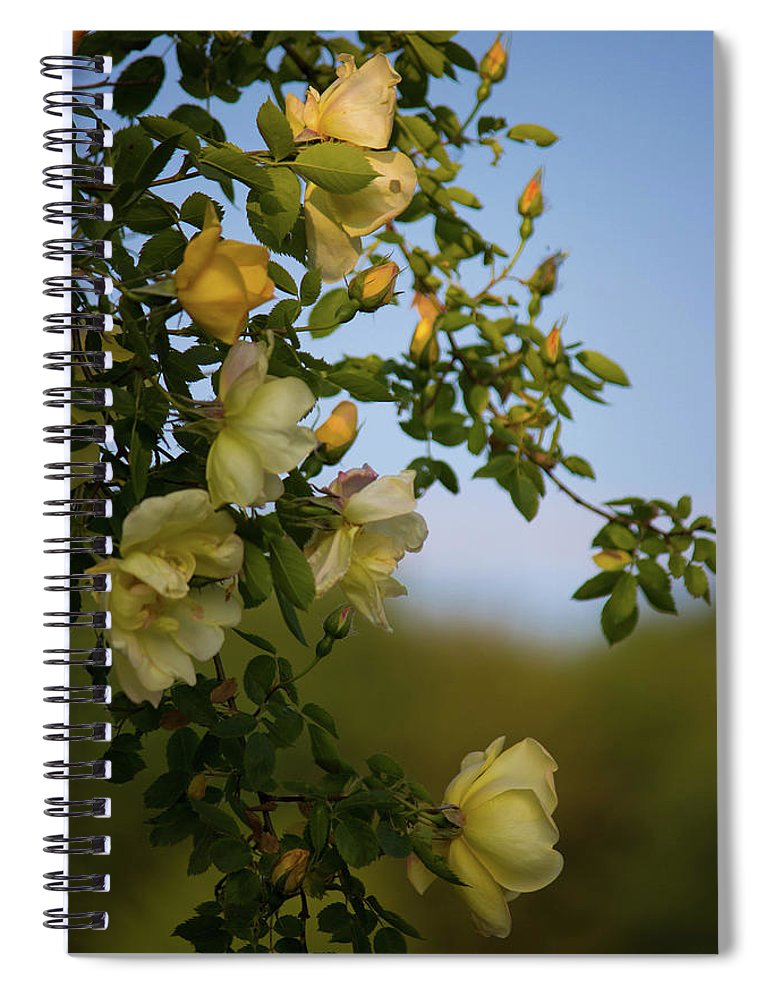 Delicate Roses - Spiral Notebook
