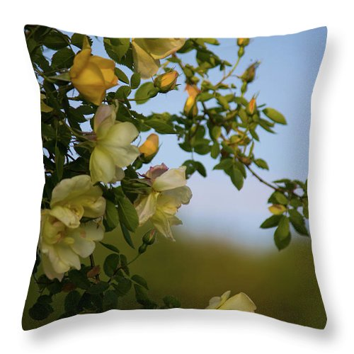 Delicate Roses - Throw Pillow