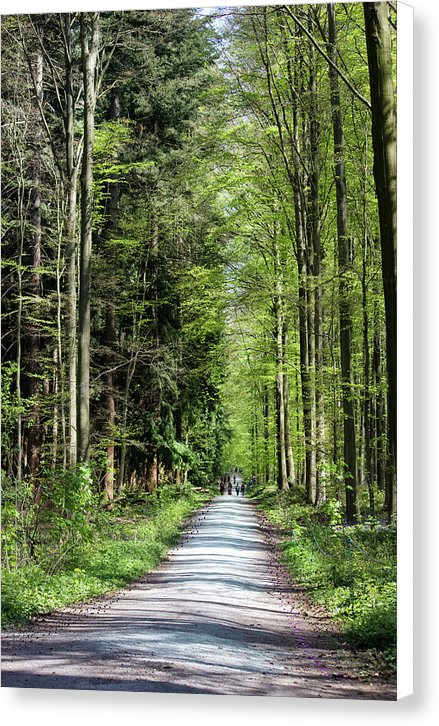 Forest Path - Canvas Print