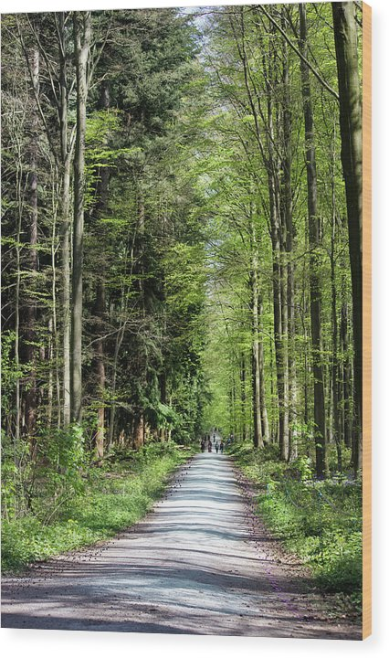 Forest Path - Wood Print