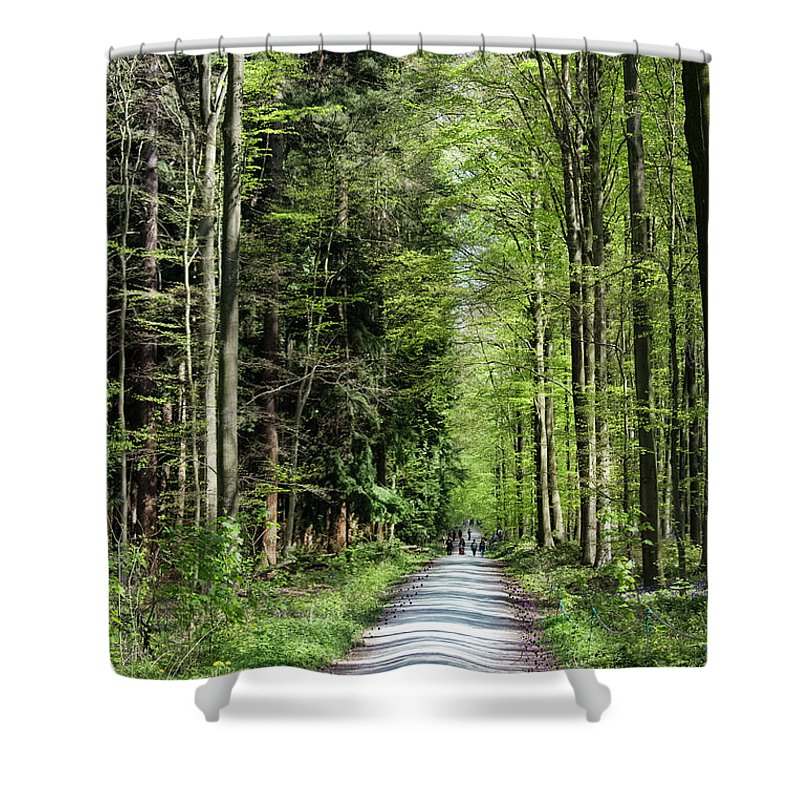 Forest Path - Shower Curtain