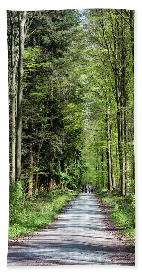 Forest Path - Beach Towel