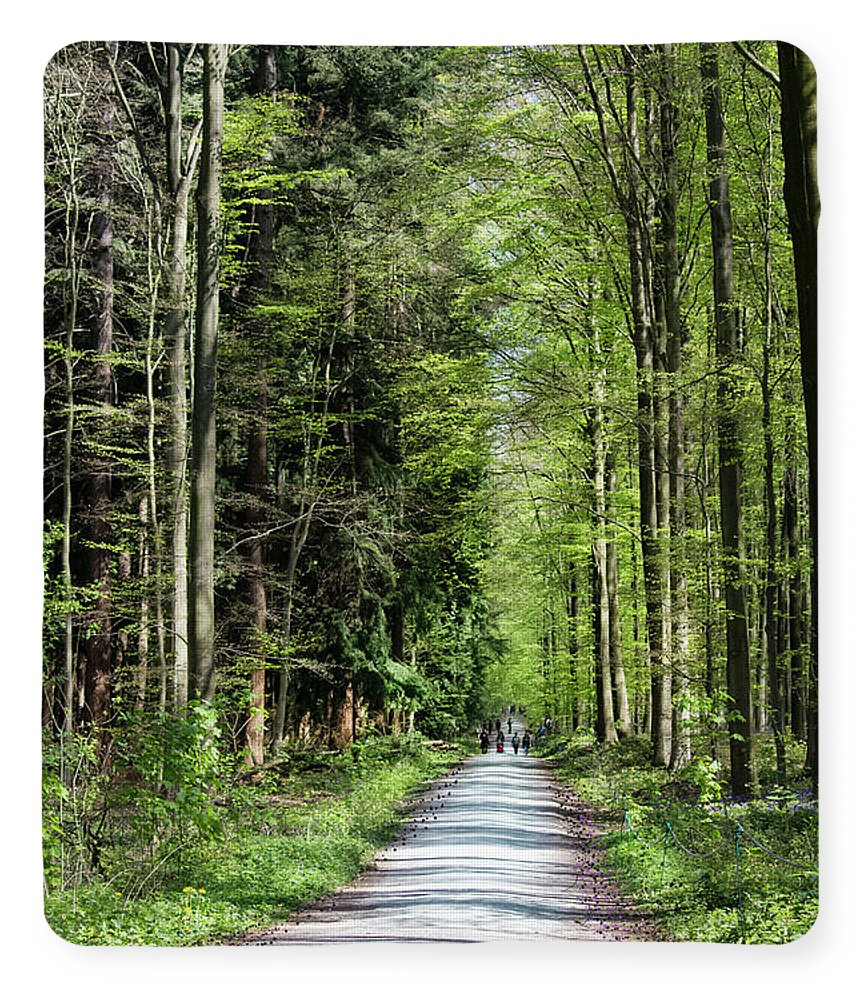 Forest Path - Blanket