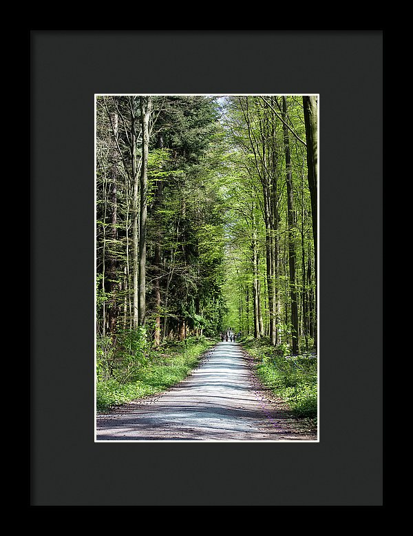 Forest Path - Framed Print