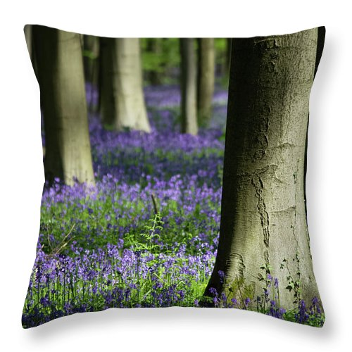Light And Shadows - Throw Pillow