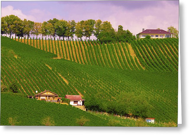 Luxembourg Vineyards Landscape  - Greeting Card