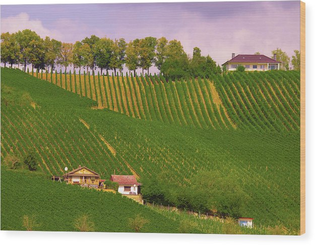 Luxembourg Vineyards Landscape  - Wood Print