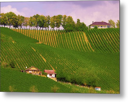 Luxembourg Vineyards Landscape  - Metal Print