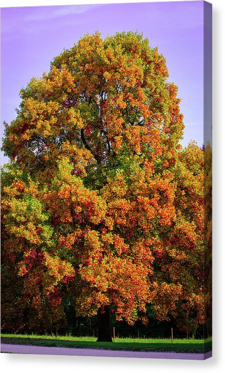 Nature In The Autumn  - Canvas Print