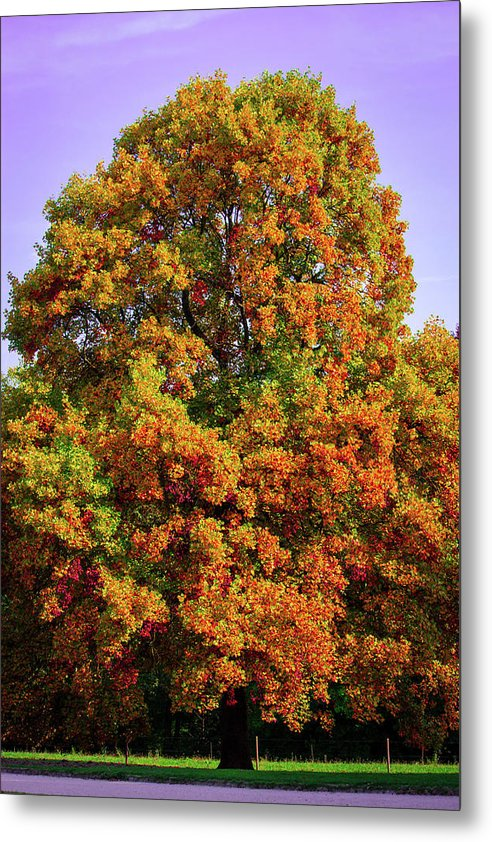 Nature In The Autumn  - Metal Print