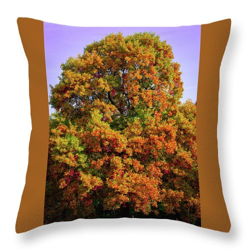 Nature In The Autumn  - Throw Pillow