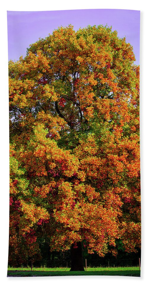 Nature In The Autumn  - Beach Towel