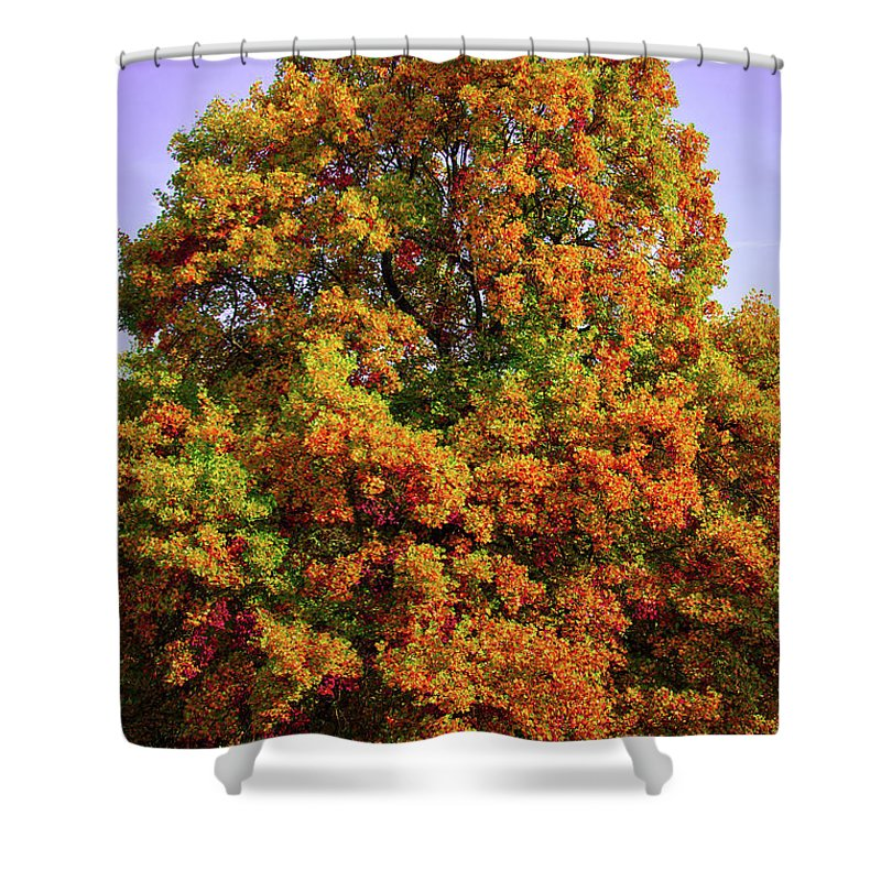 Nature In The Autumn  - Shower Curtain