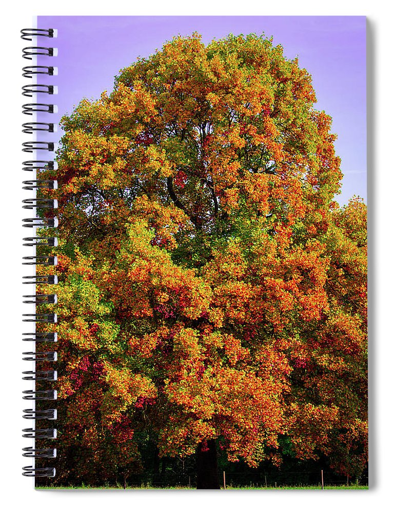 Nature In The Autumn  - Spiral Notebook