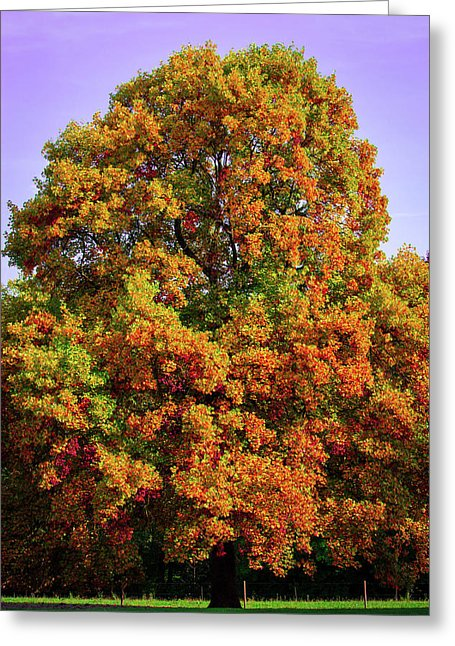 Nature In The Autumn  - Greeting Card