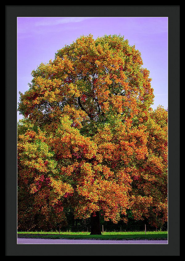 Nature In The Autumn  - Framed Print