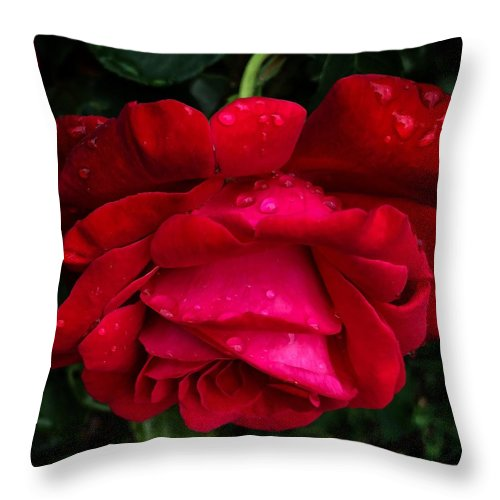 Red Rose Petals - Throw Pillow