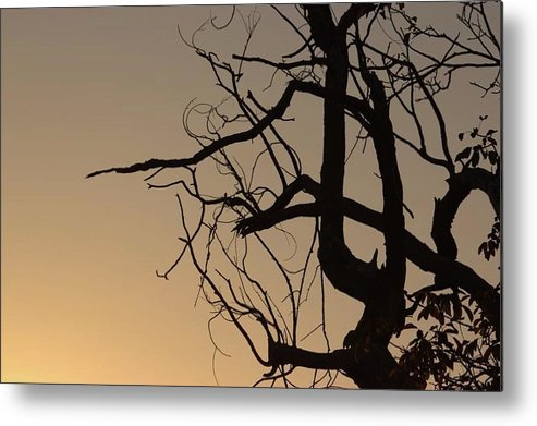 Shades Of Orange - Metal Print