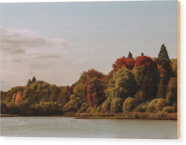 Stunning Surroundings In La Hulpe, Belgium - Wood Print