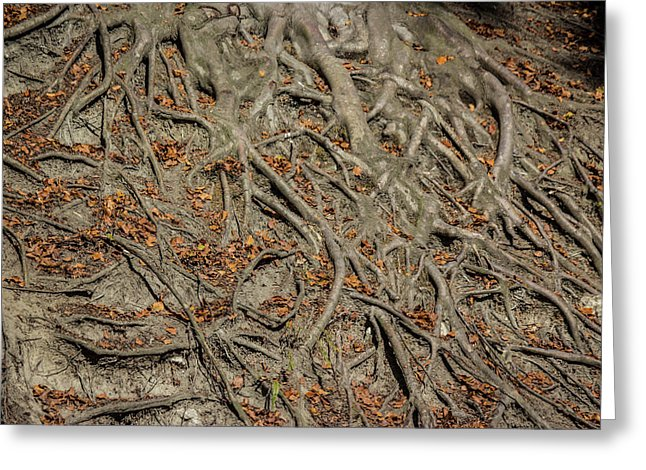 Trees' Roots - Greeting Card
