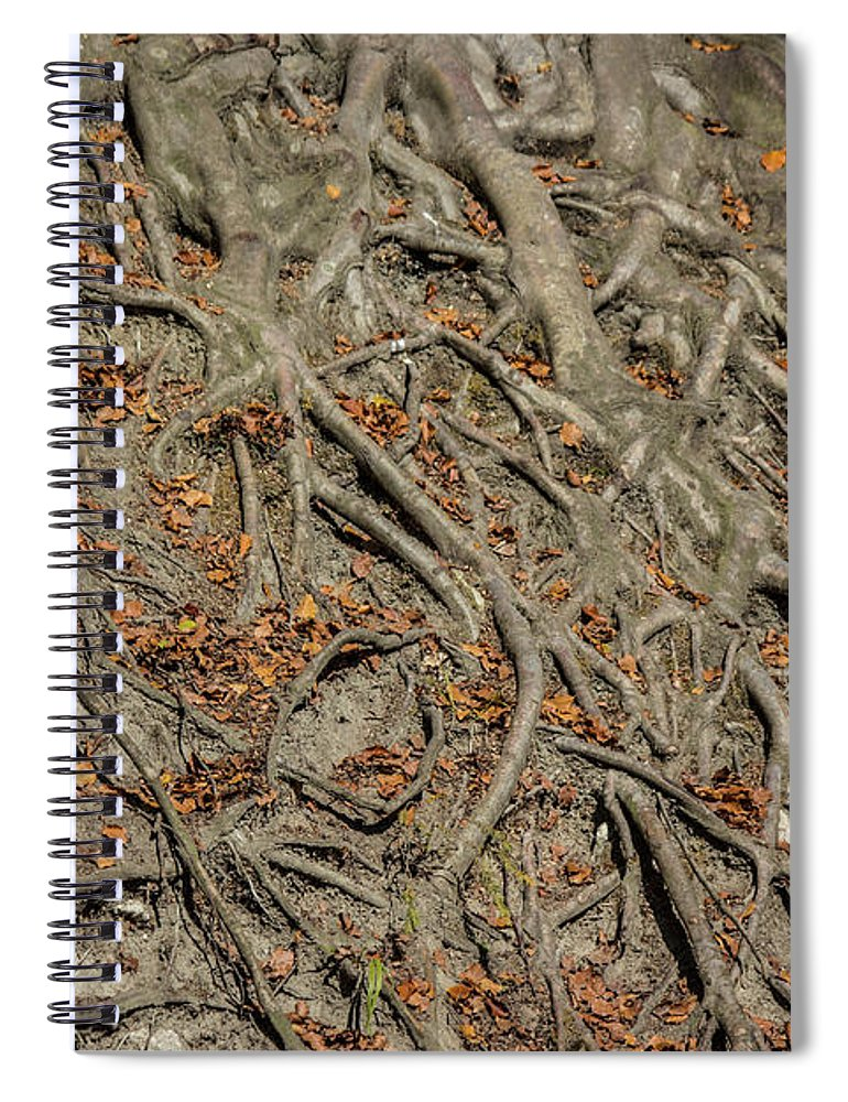 Trees' Roots - Spiral Notebook