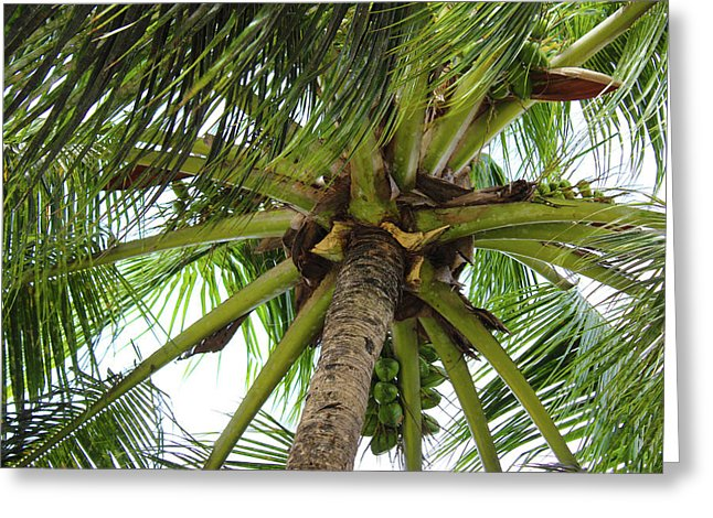 Under The Coconut Tree - Greeting Card