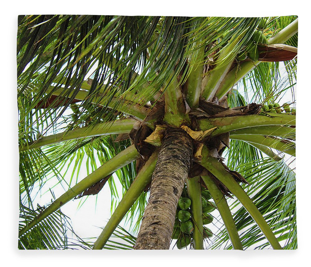 Under The Coconut Tree - Blanket
